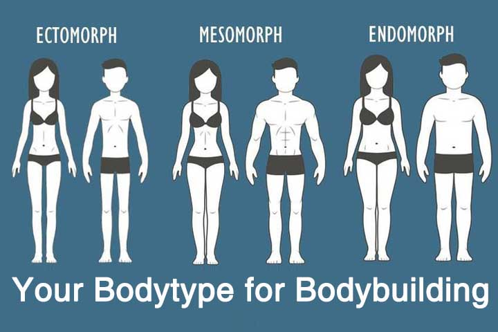 Your Body Type: It's Place in Bodybuilding